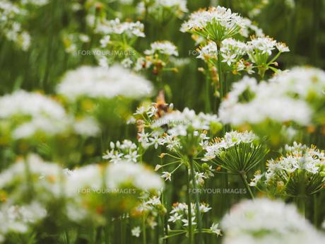 爽やかに風にゆれる草花の写真素材 [FYI01218488]