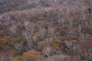 赤城山の紅葉の写真素材 [FYI01218527]