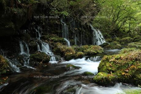 元滝伏流水の写真素材 [FYI01218528]