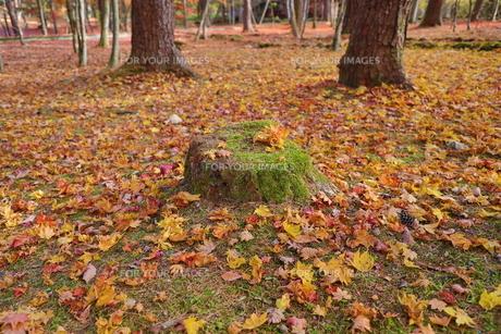 公園のひとときの写真素材 [FYI01218537]