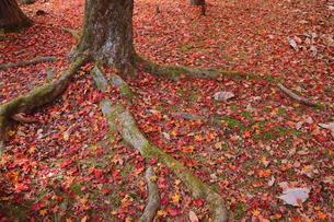 落葉の写真素材 [FYI01218538]