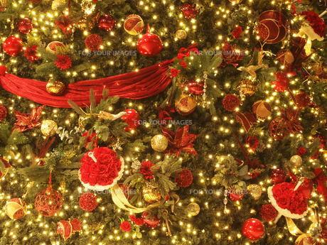 クリスマスツリーの写真素材 [FYI01218550]
