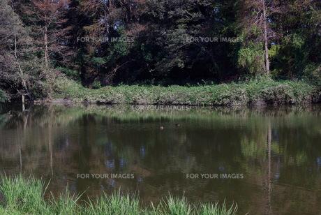 深まる秋の写真素材 [FYI01218561]