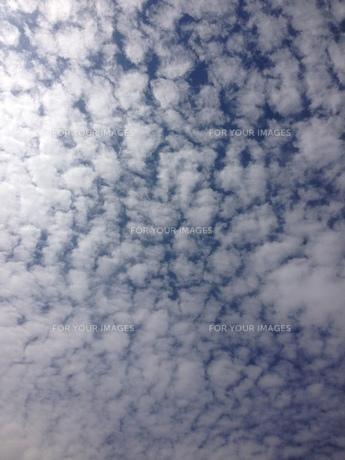 秋のうろこ雲の写真素材 [FYI01218591]