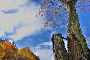 秋晴れの写真素材 [FYI01218845]