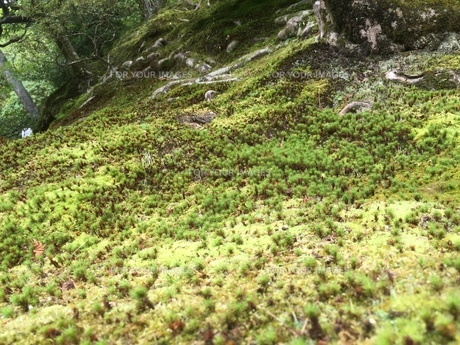苔の写真素材 [FYI01218853]