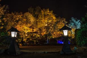 秋の桜山公園の風景の写真素材 [FYI01218863]