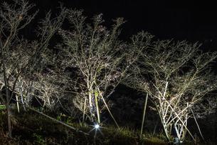 秋の桜山公園の風景の写真素材 [FYI01218864]