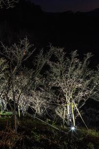 秋の桜山公園の風景の写真素材 [FYI01218865]
