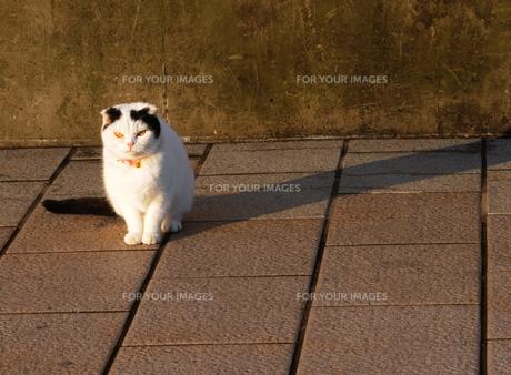 猫の写真素材 [FYI01219160]