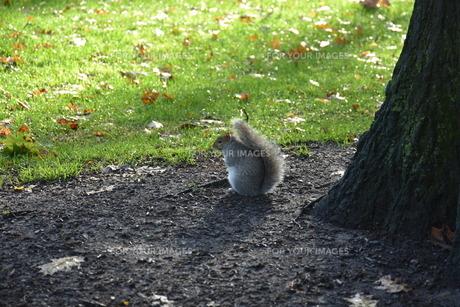 木陰で休むリスの写真素材 [FYI01219231]