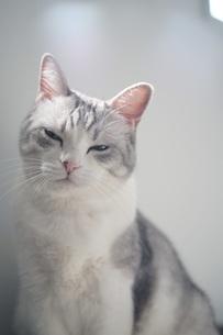 冷たい視線を送る猫の写真素材 [FYI01219237]
