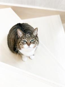 冷たい視線を送る猫パート2の写真素材 [FYI01219238]