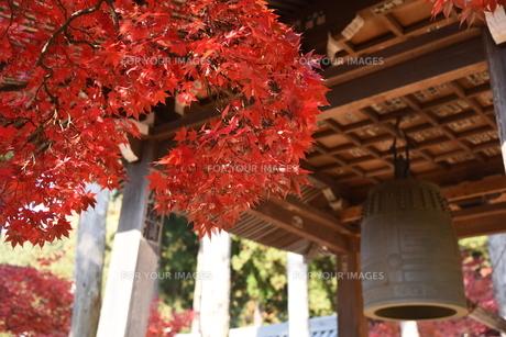 境内の紅葉と釣鐘の写真素材 [FYI01219327]