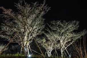 秋の桜山公園の風景の写真素材 [FYI01219408]