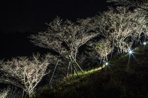 秋の桜山公園の風景の写真素材 [FYI01219409]