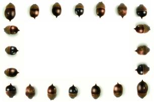 複数の並んだドングリの写真素材 [FYI01219431]