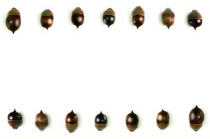 複数の並んだドングリの写真素材 [FYI01219432]