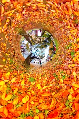 Fall of the leafの写真素材 [FYI01219613]