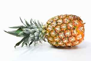 白背景のパイナップルの写真素材 [FYI01219619]