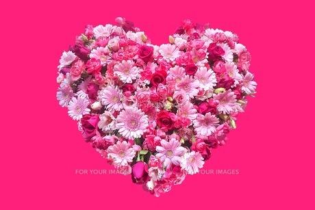 花の写真素材 [FYI01219746]