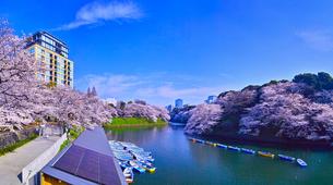 東京、千鳥ヶ淵の満開の桜の写真素材 [FYI01219819]