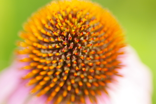 花の写真素材 [FYI01219869]