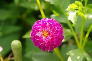 花の写真素材 [FYI01219871]