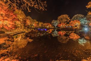 秋の桜山公園の風景の写真素材 [FYI01219925]