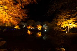 秋の桜山公園の風景の写真素材 [FYI01219928]