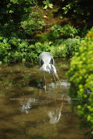 水辺の鳥の写真素材 [FYI01220295]