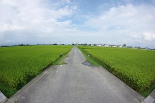 田んぼ道の写真素材 [FYI01220331]