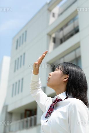 太陽に手をかざす女子高校生の写真素材 [FYI01220727]