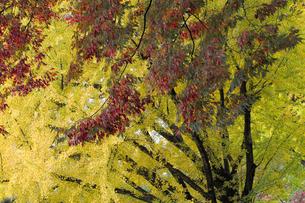 秋の彩りの写真素材 [FYI01220820]