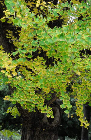 緑の葉の写真素材 [FYI01220822]