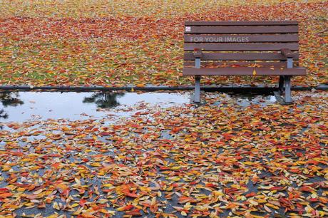 落ち葉の写真素材 [FYI01220826]