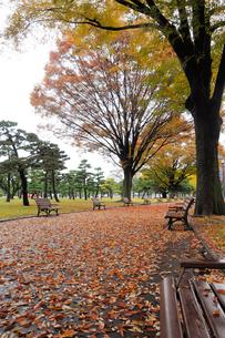 雨あがりの公園の写真素材 [FYI01220827]