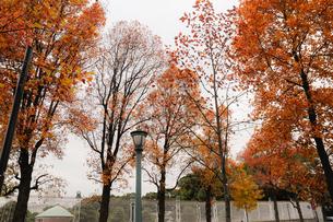 色ずく葉の写真素材 [FYI01220829]