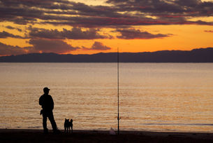 夕方の海岸で投げ釣りをする人と犬のシルエットの写真素材 [FYI01221123]