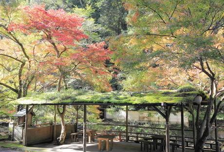 京都高雄清滝の紅葉の写真素材 [FYI01221150]