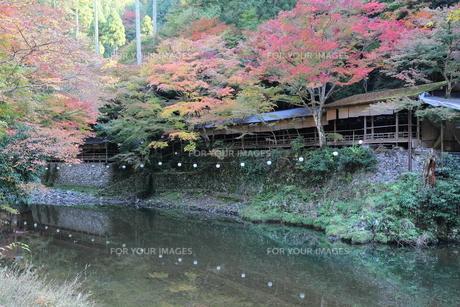 京都高雄清滝の紅葉の写真素材 [FYI01221151]