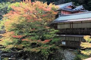 京都高雄清滝の紅葉の写真素材 [FYI01221158]