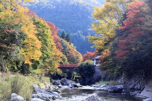 京都高雄清滝の紅葉の写真素材 [FYI01221160]