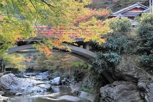 京都高雄清滝の紅葉の写真素材 [FYI01221161]