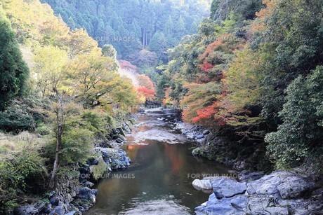 京都高雄清滝の紅葉の写真素材 [FYI01221164]