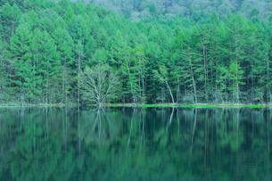 新緑の御射鹿池の写真素材 [FYI01221400]