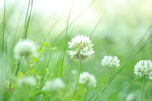 野に咲くの写真素材 [FYI01221405]