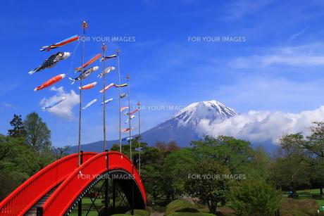 富士山と鯉のぼりの写真素材 [FYI01221491]