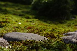 苔の写真素材 [FYI01221509]