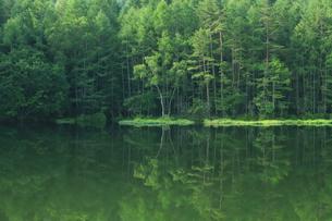 夏の御射鹿池の写真素材 [FYI01221630]